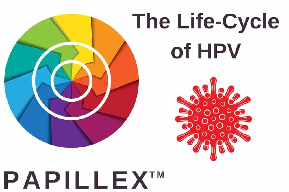 The Life-Cycle of HPV